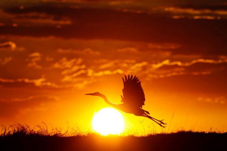 heron-in-sun