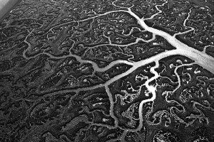 fractal-brain